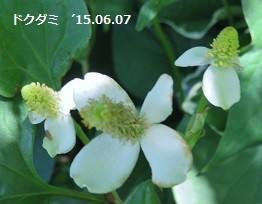 f:id:mikawakinta63:20150607220223j:image:left
