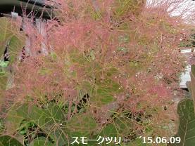 f:id:mikawakinta63:20150609160244j:image:right