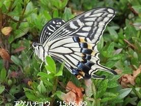 f:id:mikawakinta63:20150609163358j:image:left