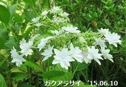 f:id:mikawakinta63:20150610141036j:image:right