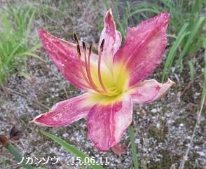 f:id:mikawakinta63:20150611165836j:image:left