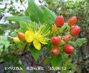 f:id:mikawakinta63:20150612140817j:image:right