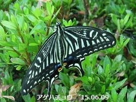f:id:mikawakinta63:20150612145511j:image:right