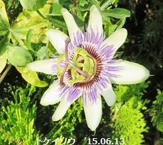 f:id:mikawakinta63:20150615140613j:image:left