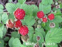 f:id:mikawakinta63:20150615145713j:image:left