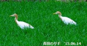 f:id:mikawakinta63:20150616172404j:image:right