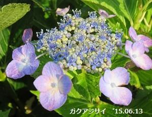 f:id:mikawakinta63:20150616200527j:image:left