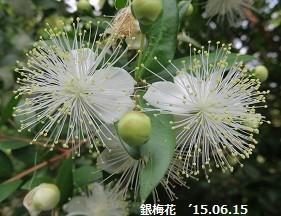 f:id:mikawakinta63:20150617143532j:image:right
