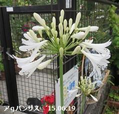 f:id:mikawakinta63:20150619135719j:image:right