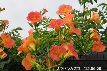 f:id:mikawakinta63:20150621201955j:image:left