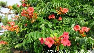 f:id:mikawakinta63:20150623143312j:image:left