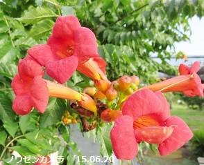 f:id:mikawakinta63:20150623151129j:image:right