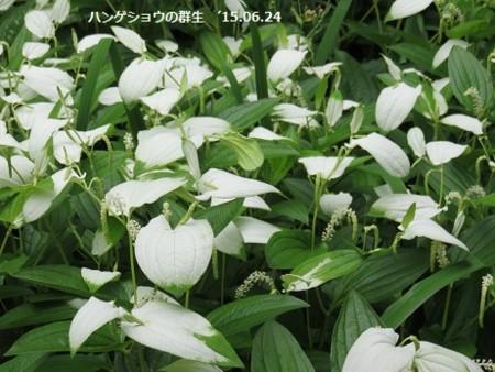 f:id:mikawakinta63:20150624162116j:image