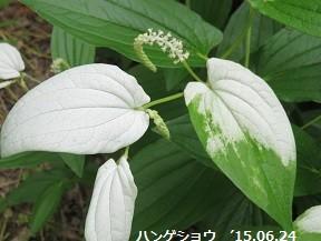 f:id:mikawakinta63:20150624162636j:image:left