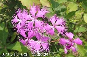 f:id:mikawakinta63:20150625133314j:image:right