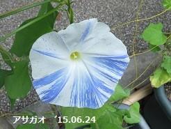 f:id:mikawakinta63:20150625140454j:image:left