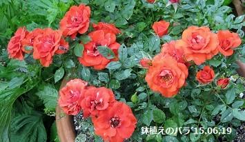 f:id:mikawakinta63:20150626111317j:image:right