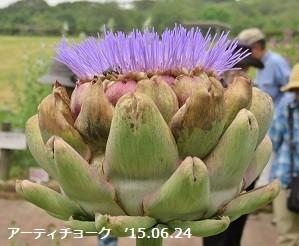 f:id:mikawakinta63:20150628154708j:image:right