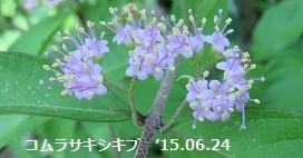 f:id:mikawakinta63:20150702163849j:image:right