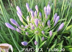 f:id:mikawakinta63:20150703154213j:image:right