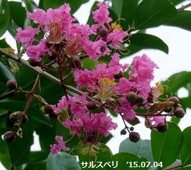f:id:mikawakinta63:20150706140445j:image:left