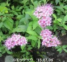 f:id:mikawakinta63:20150710153909j:image:left
