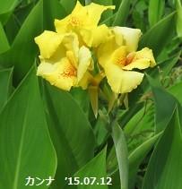 f:id:mikawakinta63:20150713154218j:image:right