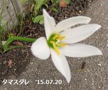 f:id:mikawakinta63:20150722172803j:image:right