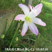 f:id:mikawakinta63:20150723124711j:image:left