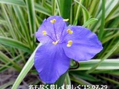 f:id:mikawakinta63:20150729160026j:image:right