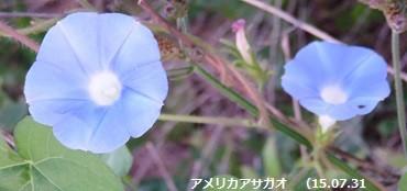 f:id:mikawakinta63:20150731103908j:image:left