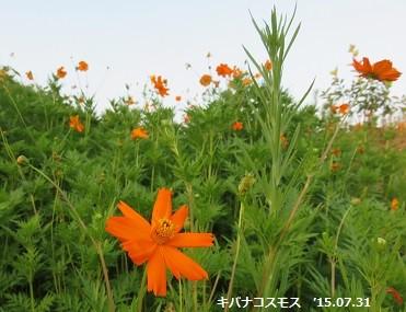 f:id:mikawakinta63:20150731111645j:image:right