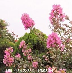 f:id:mikawakinta63:20150805135913j:image:right
