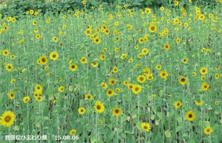 f:id:mikawakinta63:20150806105550j:image