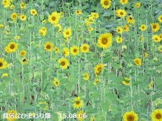 f:id:mikawakinta63:20150806152856j:image:right