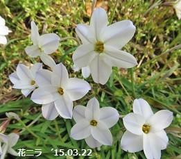 f:id:mikawakinta63:20150824145940j:image:right