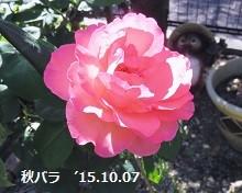 f:id:mikawakinta63:20151007141805j:image:left