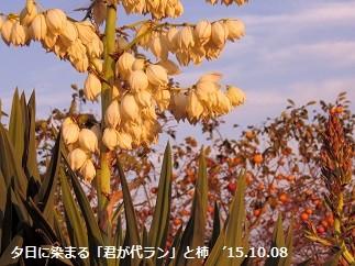 f:id:mikawakinta63:20151008160321j:image:right