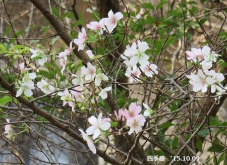 f:id:mikawakinta63:20151009104359j:image