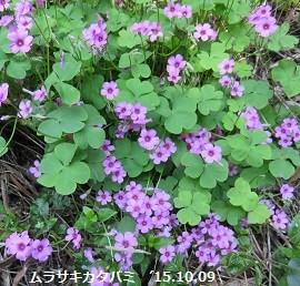 f:id:mikawakinta63:20151009161609j:image:left