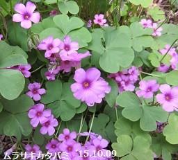 f:id:mikawakinta63:20151009174930j:image:right