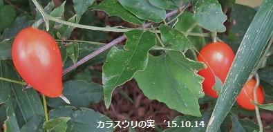f:id:mikawakinta63:20151014141218j:image