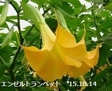 f:id:mikawakinta63:20151014172451j:image:left