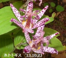 f:id:mikawakinta63:20151018210720j:image:left