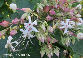f:id:mikawakinta63:20151019133809j:image:left