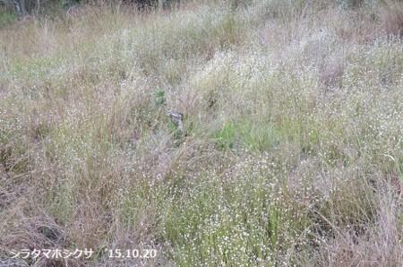 f:id:mikawakinta63:20151020171801j:image