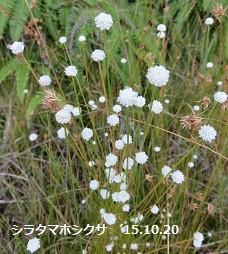f:id:mikawakinta63:20151020210224j:image:left