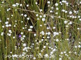 f:id:mikawakinta63:20151023134150j:image:left