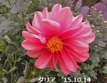 f:id:mikawakinta63:20151023150050j:image:right