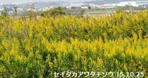 f:id:mikawakinta63:20151025213139j:image:right